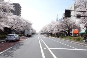 daigaku-dori